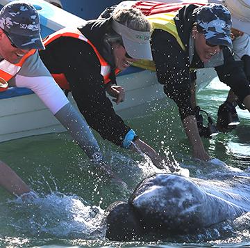 baja-whale-page1