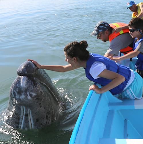 baja-whale-page