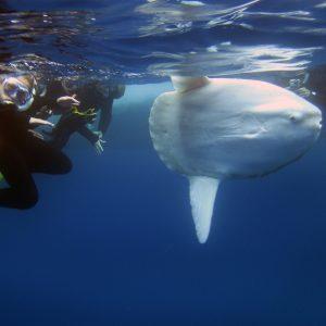 SEACAMP III Boat Trip Snorkel