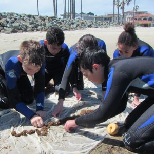 Seining at Mission Point