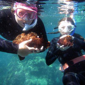 Snorkeling During SCIII Boat Trip